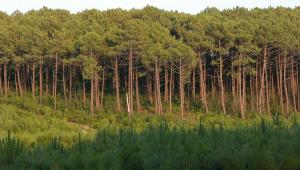 img_variables/diaporamas/nature2/foretlandes.jpg